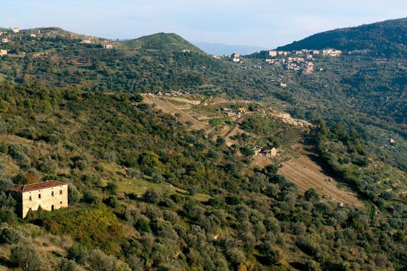 I colli dove nasce l'olio della Cooperativa Agricola Nuovo Cilento