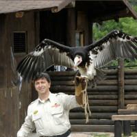 Il Safari Park e i suoi divertimenti
