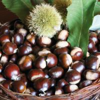 Le castagne, un altro dei prodotti tipici della zona di Calitri