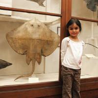 Musei per bambini e non solo a Firenze