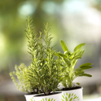 Le piante aromatiche biologiche RaveraBio