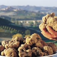 Sagra del tartufo: appuntamenti in tutta Italia