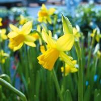 Fiori di primavera, rinascono i giardini