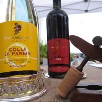Malvasia_Azienda vinicola Costamezzana