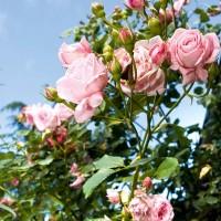 I fiori del giardino di Erny Massini