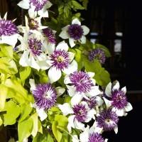 Altri fiori del giardino segreto