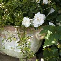 Un vaso nel giardino segreto