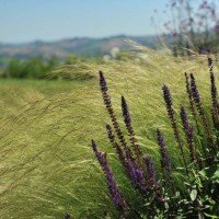 Un dettaglio dell'oasi verde nelle Marche