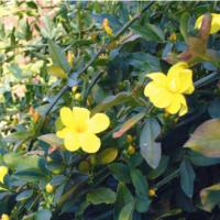 Febbraio in giardino