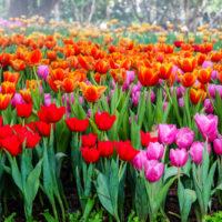 Fiori di aprile, trionfo di colori nei nostri giardini