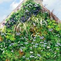 Il tetto verde della casa adiacente al giardino