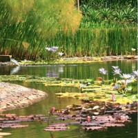 Progetto insolito in un giardino azteco