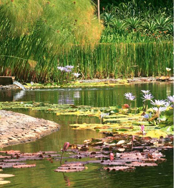 L'impressione è quella di trovarsi in un microcosmo verde in cui le piante sono curate e rigogliose