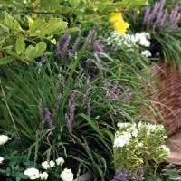 Il terrazzo è ricco di piante e fiori resistenti anche alla brutta stagione