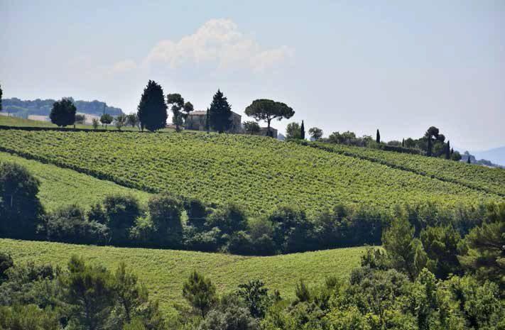Strada dei vini
