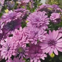I fiori rendono allegro e vivo il giardino
