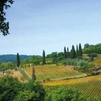 Brunello: le ragioni di un investimento vincente
