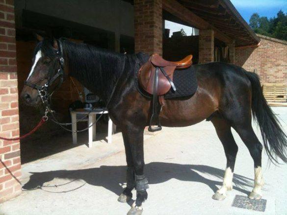 Il maneggio permette splendide passeggiate a cavallo