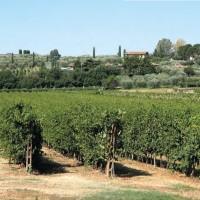 Amarone: il vino degli innamorati