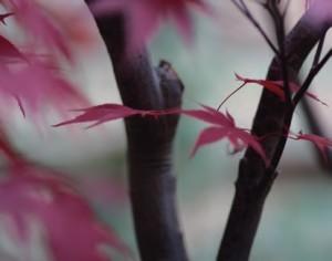 Giardino Zen nelle Marche