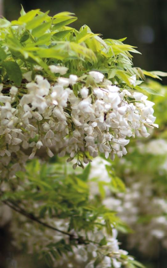 Giardino Zen Regole : Giardino zen che meraviglia nelle marche ville casali