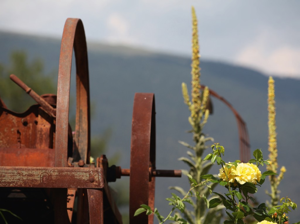 Il roseto sulle Dolomiti