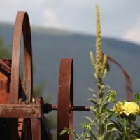 Roseto-Dolomiti (7)