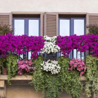 ONE Liquido: l'alleato per la cura del tuo giardino