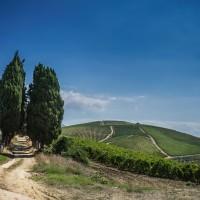 Vino Spadafora: aroma bio di qualità