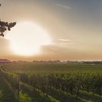 Amarone: una produzione ecosostenibile
