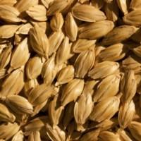 Sapori della tradizione: il grano