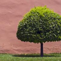 Concime per il giardino: la soluzione migliore