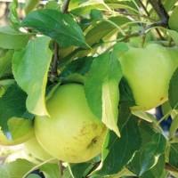 Frutteto in inverno: consigli utili