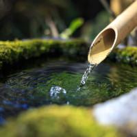 Giardino zen: quattro facce di verde