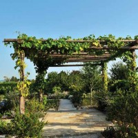Creare-un-giardino2
