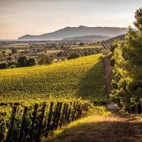 Vigneto toscano: una storia di vino e passione