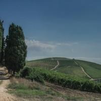 Vino bio dal cuore della Sicilia