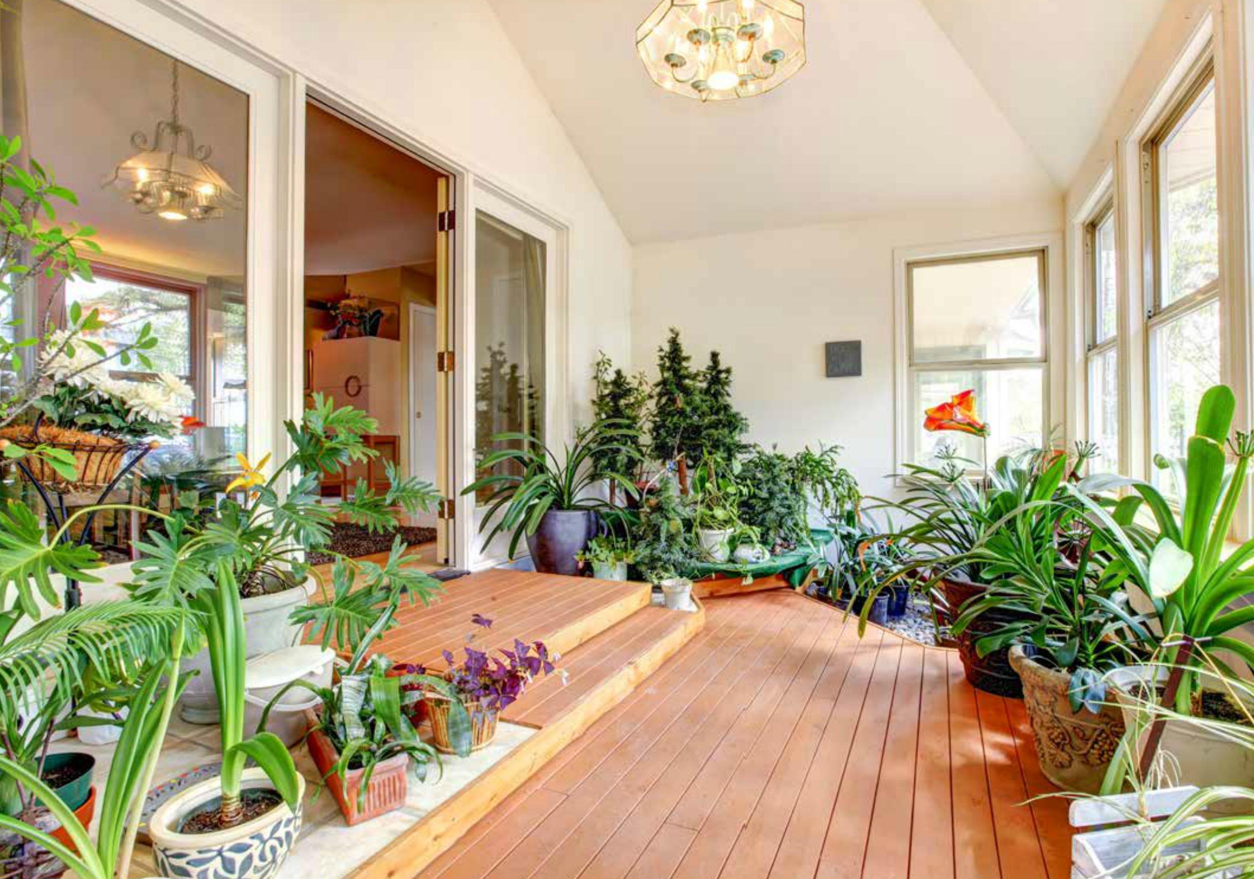 Piante Da Arredo Appartamento piante da appartamento: come prendersene cura