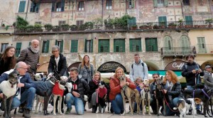 Verona pet friendly