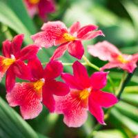 OrchIdea: la festa delle orchidee a Pistoia