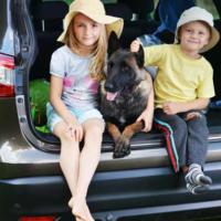 Viaggi pet friendly: cosa cercare in vacanza con Fido