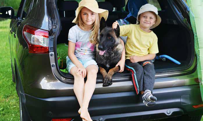 viaggio con il cane