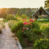 10 piante per il giardino estivo