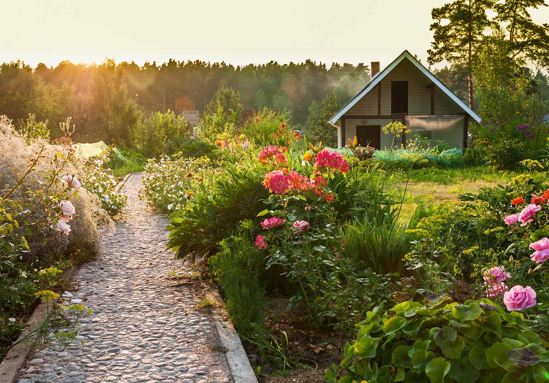 10 piante per il giardino estivo ville casali for Giardino zen piante