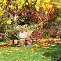 Cura del giardino: pratiche per prepararsi all'autunno