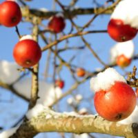 Giardino d'inverno: sei modi per prepararlo al freddo