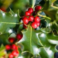 Spese di Natale in vista? Ecco le sei piante per un regalo perfetto