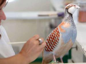 uccelli ceramica