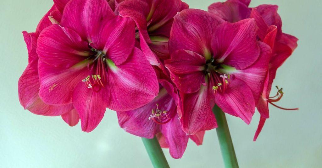 I consigli per arredare gli ambienti della casa con le for Arredare casa con le piante