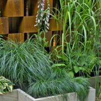 Creare un giardino in casa